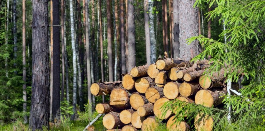 Eco Friendly Heating With Wood Burning Stoves We Love