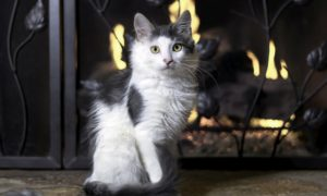 5 Steps to Childproof & Pet Proof Your Fireplace